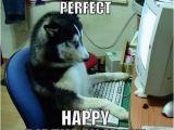 Birthday Meme with Dogs Happy Birthday Memes Dog Wishesgreeting