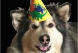 Birthday Memes with Dogs Happy Birthday Memes Dog Wishesgreeting