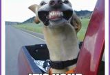 Birthday Memes with Dogs Happy Birthday Memes with Funny Cats Dogs and Cute Animals