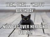 Black Cat Birthday Meme 13 Best Best Funny Memes 2018 Images On Pinterest Funny