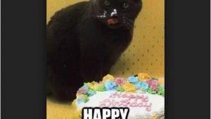 Black Cat Birthday Meme 45 Cat Birthday Memes Wishesgreeting