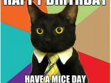 Black Cat Birthday Meme Beautiful Cat Happy Birthday Memes Pics Good Morning
