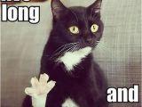 Black Cat Birthday Meme Live Long and Prosper Funny Cats Dump A Day