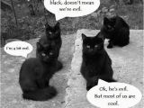 Black Cat Birthday Meme Not All Black Cats are Evil sort Of Meme Humor