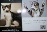 Cat Birthday Card Sayings Cute Cat Birthday Quotes Quotesgram