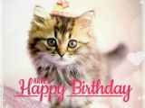 Cat Birthday E Card Best Happy Birthday Cat Meme