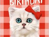Cat Birthday E Card Cat Birthday Wishes Wishes Greetings Pictures Wish Guy