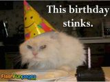 Cat Birthday E Card Funny Cat Pictures Ecards for Facebook