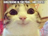 Cat Birthday Meme Generator 25 Best Ideas About Cat Meme Generator On Pinterest