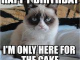 Cat Birthday Meme Generator Grumpy Cat Birthday Grumpy Cat Happy Birthday I 39 M