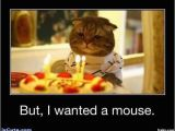Cat Birthday Meme Generator Sad Birthday Cat Meme Generator Image Memes at Relatably Com