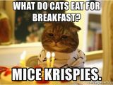 Cat Birthday Meme Generator What Do Cats Eat for Breakfast Mice Krispies Sad