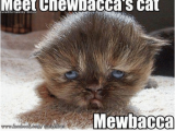 Chewbacca Birthday Meme Star Wars Fact 4762 today May 19th is Peter Mayhew 39 S 73rd