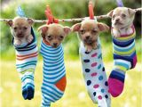 Chihuahua Birthday Cards Chihuahuas Birthday Card Hanging Out together Cute Puppy