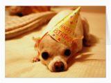 Chihuahua Birthday Cards Cute Chihuahua Dog Greeting Card Zazzle Com
