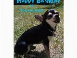 Chihuahua Birthday Cards Pin Cute Chiwawa On Pinterest
