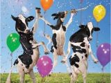 Cow Birthday Decorations Funny Mad Cow Party Birthday Card Balloons Dancing Cows