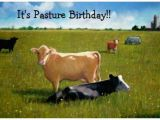 Cow Birthday Meme Angry Cow Meme Birthday Pictures to Pin On Pinterest