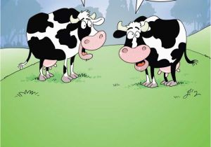 Cow Birthday Meme Funny Quotes About Cows Quotesgram – BirthdayBuzz