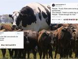 Cow Birthday Meme Cow Funny Birthday Memes Www topsimages Com