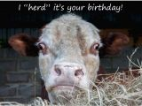 Cow Birthday Meme Funny Birthday Card I Quot Herd Quot It 39 S Your Birthday Card
