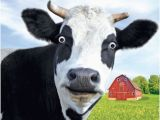Cow Birthday Meme Gogglies 3d Moving Eyes Funny Cow Moo Ving House Card 1stp