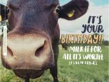Cow Happy Birthday Meme 21 Best Happy Birthday Images On Pinterest Happy