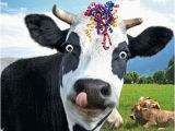 Cow Happy Birthday Meme Funny Cow Streamers Birthday Card Happy Birthday to Moo