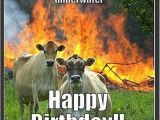 Cow Happy Birthday Meme Happy Birthday Cow Meme Best Happy Birthday Wishes
