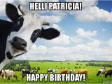 Cow Happy Birthday Meme Helli Patricia Happy Birthday Make A Meme