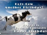 Cow Happy Birthday Meme Holy Cow Another Birthday