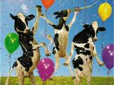 Cow Happy Birthday Meme Pin Van Patricia Hogenes Op Happy Birthday Pinterest