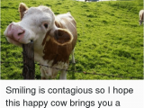 Cow Happy Birthday Meme Smiling is Contagious so I Hope This Happy Cow Brings You