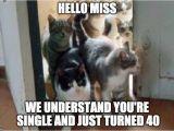 Crazy Lady Birthday Meme 40th Birthday Crazy Cat Lady Birthday Cards Gatos
