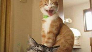 Crazy Lady Birthday Meme Happy Birthday Crazy Lady Crazy Cats 2 Meme Generator