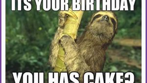 Cute Animal Birthday Meme Happy Birthday Memes with Funny Cats Dogs and Cute Animals