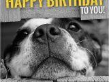 Cute Animal Happy Birthday Meme Funny Animal Meme Happy Birthday