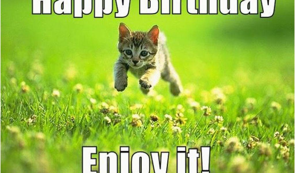 Cute Birthday Memes for Her Best Happy Birthday Cat Meme