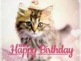 Cute Cat Birthday Meme Best Happy Birthday Cat Meme