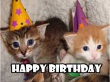 Cute Cat Birthday Meme Happy Birthday Meme 2018 100 Plus Memes Worth Sending Funny
