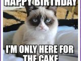 Cute Cat Birthday Meme Happy Birthday Memes with Funny Cats Dogs and Cute Animals
