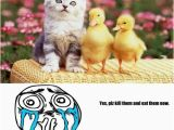 Cute Cat Birthday Meme Kitty Cute Cat Birthday Memes Best Collection Of Funny