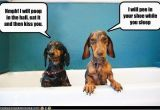 Dachshund Happy Birthday Meme 10 Hilarious and True Dachshund Memes that Will totally