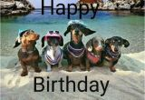 Dachshund Happy Birthday Meme Best 25 Funny Birthday Card Messages Ideas On Pinterest