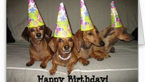 Dachshund Happy Birthday Meme Dachshund Birthday Meme Google Search Birthday Cards
