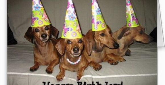 Dachshund Happy Birthday Meme Dachshund Birthday Meme Google Search Birthday Cards