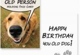 Dog Birthday Card Sayings Birthday Wishes for A Dog Lover Wishesgreeting