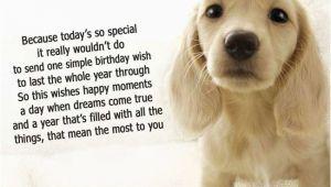 Dog Birthday Card Sayings Dog Birthday Quotes Quotesgram