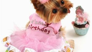 Dog Birthday Dresses It 39 S My Birthday Dog Tutu Dress