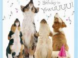 Doggie Birthday Cards Best 25 Happy Birthday Dog Meme Ideas On Pinterest